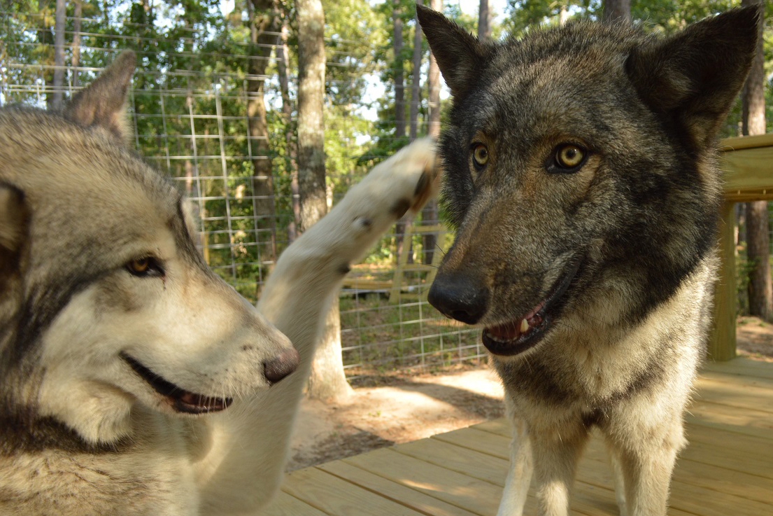 Havoc wants a high paw from his buddy
