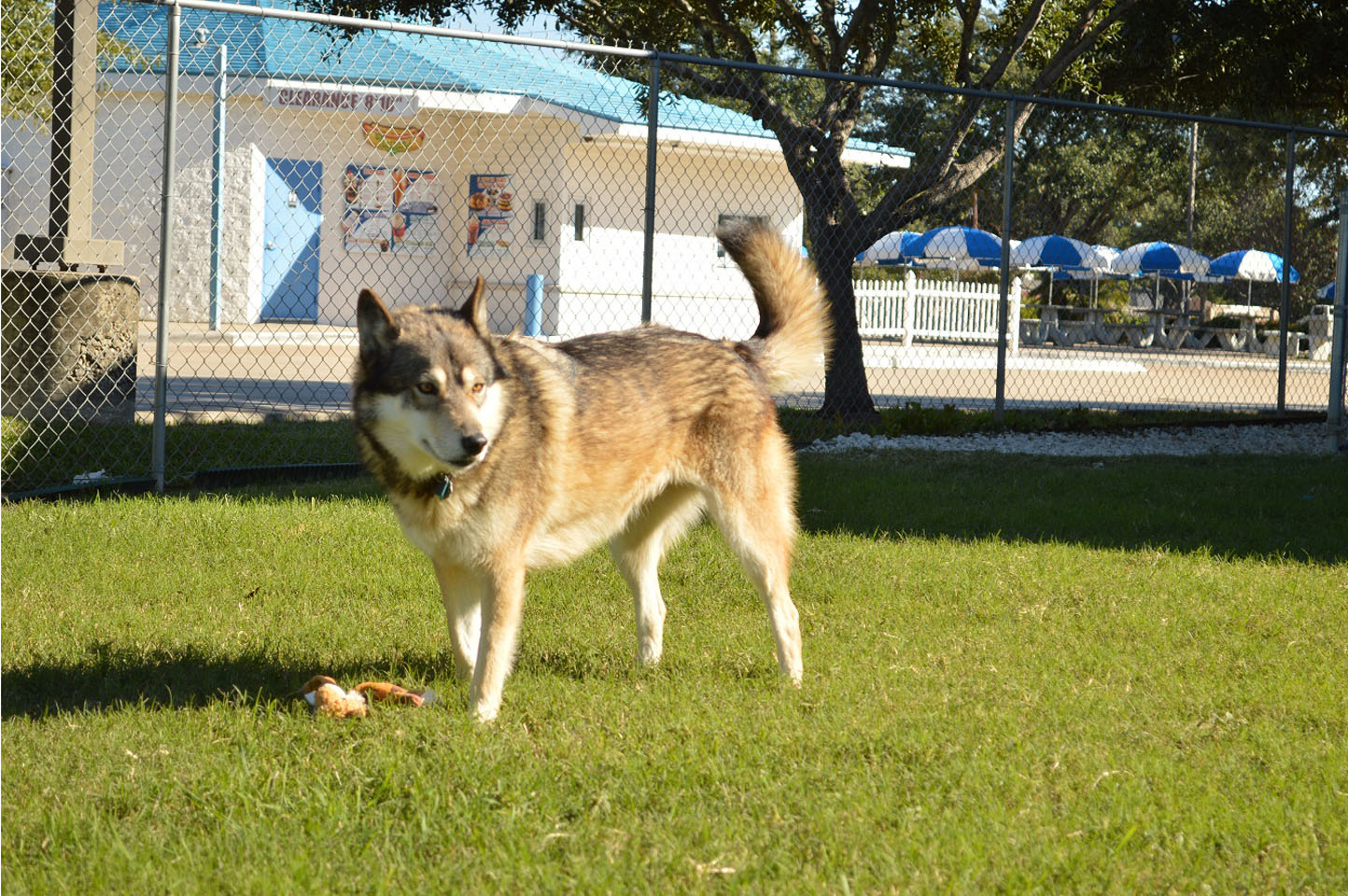 Lakota plays fetch outside