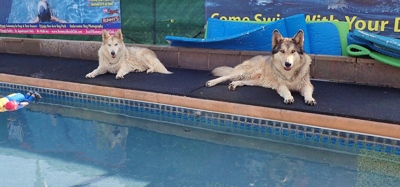 Wolfster & Luna Loo love to swim