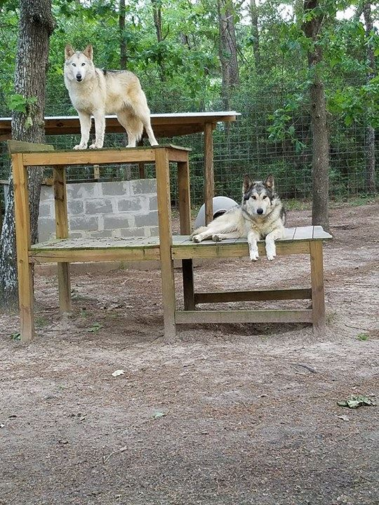 Wolfster & Luna Loo (to be adopted together)