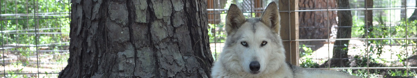 Texas Wolfdog Project Contact Header Image