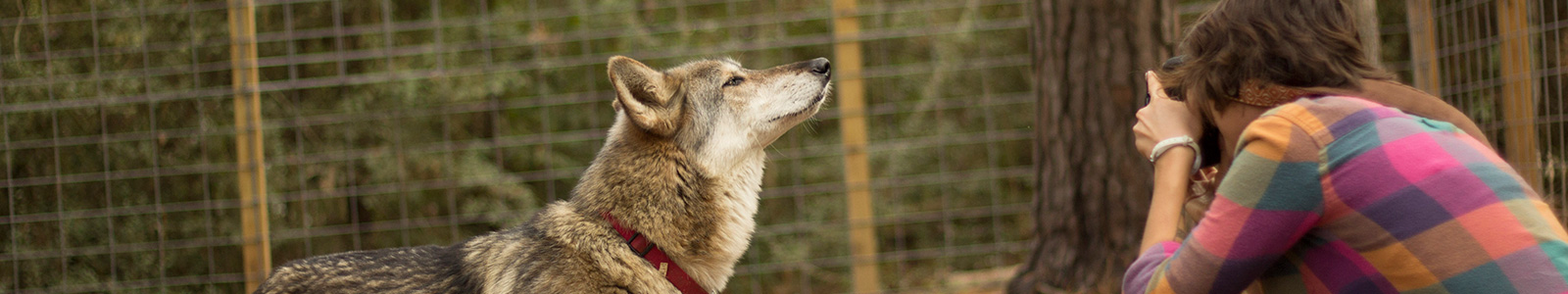 Texas Wolfdog Project Loving Tributes - Detail Header Image